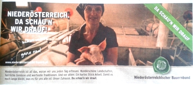 NÖBauernbundWerbungZuchtschweineklein