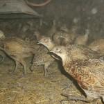 Offener Brief an die Burgenländische Landesrätin für Jagd und Tierschutz, Verena Dunst