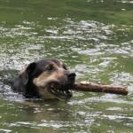 Jägerschaft verpflichtet GrundbesitzerInnen, am EIGENEN Grund Hunde anzuleinen
