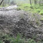 Gesetzesbruch der Regierung im Tierschutz Teil 1: Jagdgatter Mayr-Melnhof im Natura 2000 Gebiet