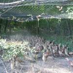 Tierschutzrat beschließt EINSTIMMIG Verbot des Aussetzens von Zuchttieren für die Jagd!