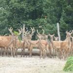 Gatterjagdverbot und Anderes im neuen Burgenländischen Jagdgesetz
