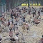 Offener Brief an Alfons Mensdorff-Pouilly zum neuen Jagdgesetz im Burgenland