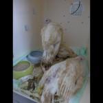 Klagsbeantwortung: Michael Hess, Josef Mengele und Tierversuche an Puten