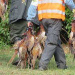 """Tierschutz versus Jägerschaft: wer lässt """"Anstand und Respekt vor dem Gesetz vermissen""""?"""