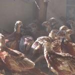 Wildbiologe und Jagdwirtschaftler Klaus Hackländer: Aussetzen von Fasanen, Enten und Hasen ist Tierquälerei