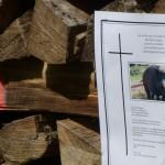 Anzeige wegen Amtsmissbrauch gegen Staatsanwältin im Salzburger Gatterjagd-Pickerl-Prozess