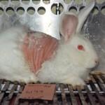 Titelstory pro Tierversuche im Profil: Offener Brief an die Chefredaktion