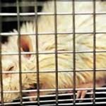 Weiterer offener Brief an die Profilredaktion zu Tierversuchen