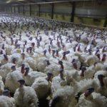 Marode Vet Uni Wien bezahlt Kosten für sinnlose Klagen von Tierexperimentator Hess