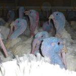 Sammlung der Fakten gegen die Klage von Tierexperimentator Michael Hess