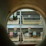 Profil Tierversuchsartikel: dritter offener Brief