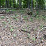 Auflösung des Jagdgatters Lainzer Tiergarten: die Natur atmet auf