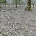 Anzeige gegen Maximilian Mayr-Melnhof wegen Waldverwüstung nach § 16 Forstgesetz