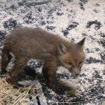 Ein neues Wildtierspital der Stadt Wien
