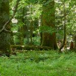 Endlich wieder im Urwald zu Besuch!