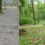 Auflösung eines Jagdgatters: der Stand im Lainzer Tiergarten