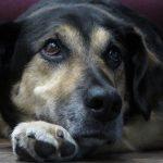 Tierschutz heißt die Interessen der Tiere zu vertreten