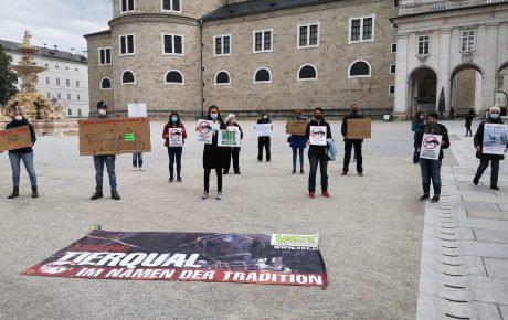 Salzburg: Fiaker statt Taubenhaus?