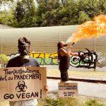 Extremistischer VGT? - ein Herr Bohrn-Mena macht sich zum Kasperl