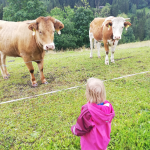 Klimakiller Kuh