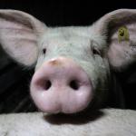 Der NÖ Bauernbund fordert: Staatsziel Selbstversorgung in Österreich