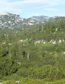 Von Almen und der Zerstörung von Naturlandschaften