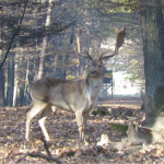 VGT-Stellungnahme zur Jagdgesetzreform, durch die das Gatterjagdverbot aufgehoben werden soll
