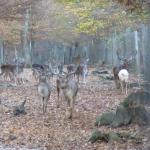 Stellungnahme des Ökologischen Jagdverbandes zur geplanten Aufhebung des Gatterjagdverbots
