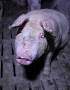 """Wieviel Tierschutz steckt im """"Tierschutz""""volksbegehren?"""