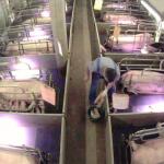 Antwort auf Tierindustrie-Propaganda in einem Falter-Artikel