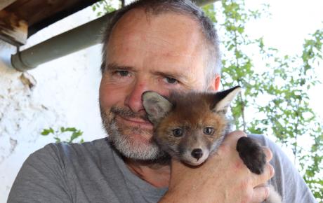 Ein Plädoyer für den Fuchs